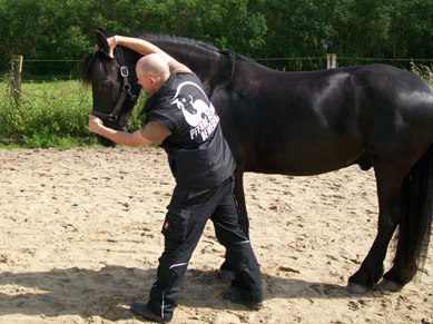 001 Pferde physiotherapie