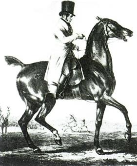 Louis Seeger Reitmeister und Lehrer Gustav Steinbrechts