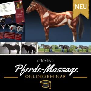 Mehr zum Gleichgewicht und der Balance des Pferdes im Onlinekurs Pferde effektiv massieren