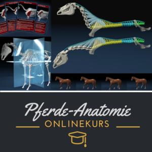 Mehr zum Kiefergelenk und Zungenbein des Pferdes im Onlinekurs Pferdeanatomie