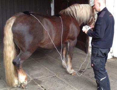 Pferde geniessen die Behandlung mit dem Amplimed und empfinden diese in der Regel als sehr entspannend