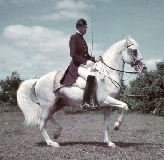 Der ehemalige Leiter der spanischen Hofreitschule Wien - Alois Podhaisky