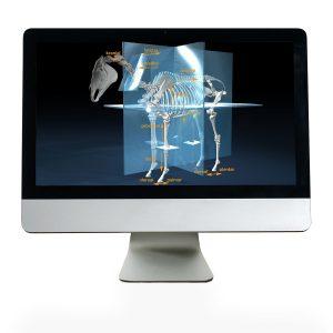 Onlinekurs Pferdeanatomie - bequem und unabhängig, jederzeit verfügbar