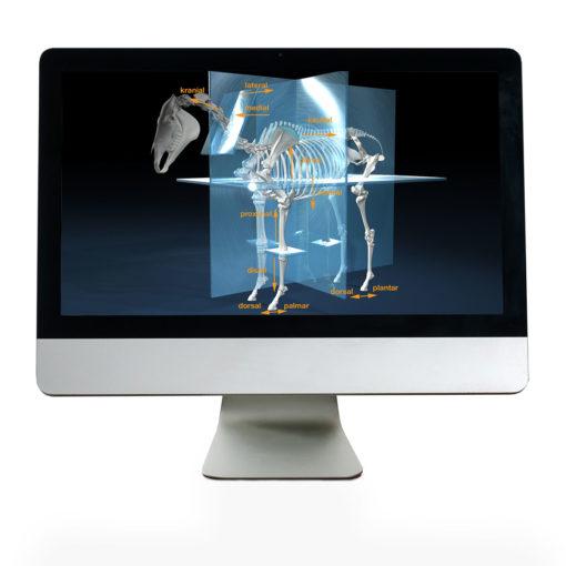Onlinekurs Pferde Anatomie und Biomechanik