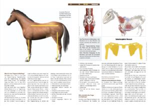 Download eine des PDF Artikels zum Thema Trageerschöpfung beim Pferd